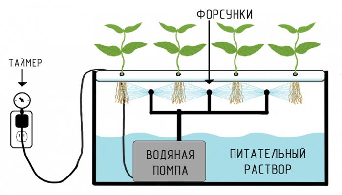 выращивание конопли на гидропонике