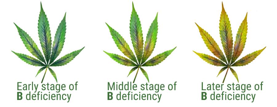 выращивание конопли, выращивание, конопля, марихуана,