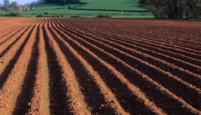 Органическая почва для выращивания марихуаны