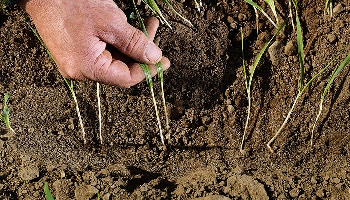 Почва. Структура и физические свойства
