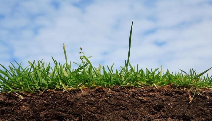 Почвы с низким и высоким СЕС