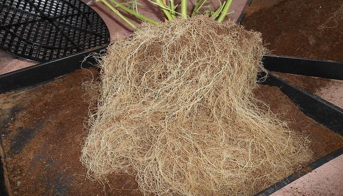 Что такое «стесненные корни»?