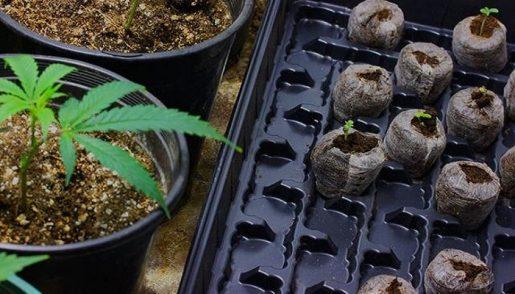 субстрат, выращивание конопли,