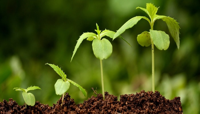 Водоросли – стимулятор роста