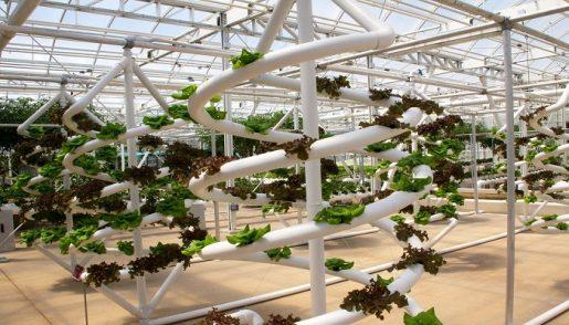 метод выращивания,