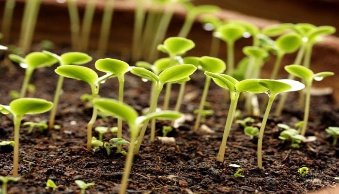 Правильное удобрение растений