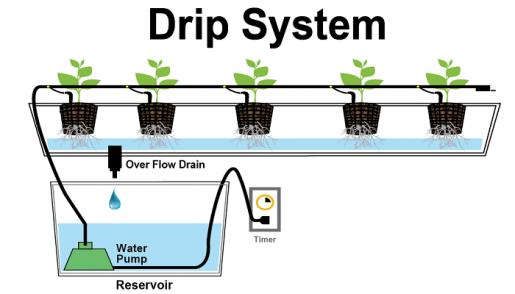 гидропонная установка, выращивание конопли,