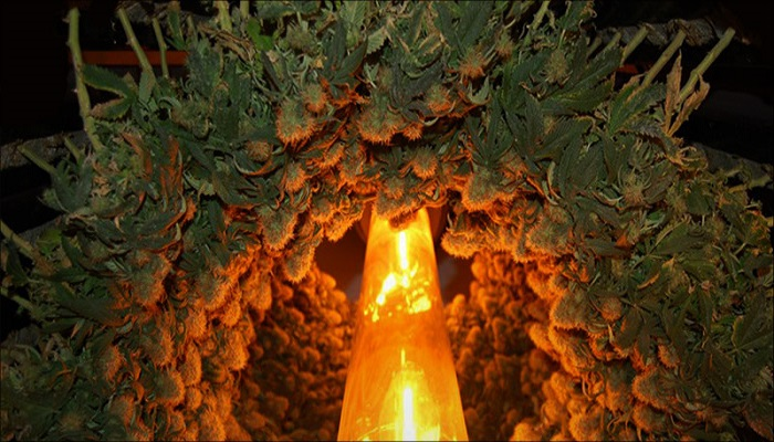 Вертикальное выращивание – будущее культивации каннабиса?