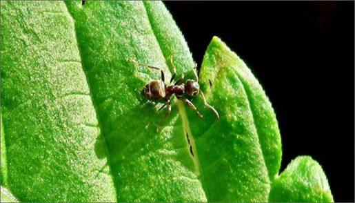 насекомые, муравьи, гроубокс,