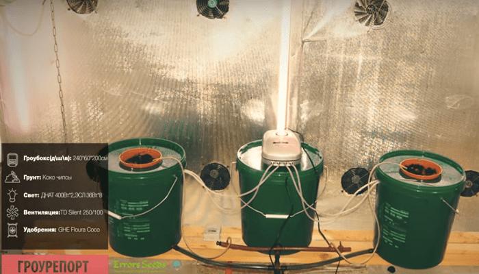 Выращивание марихуаны DWC Гроурепорт Bubble Gum