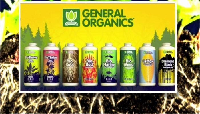 General Organiсs – выбор Гроверов