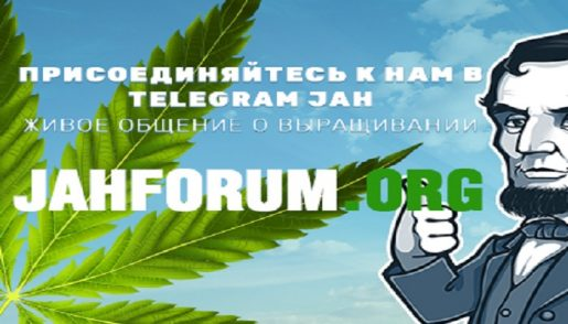 jahforum, telegram, соц сети,