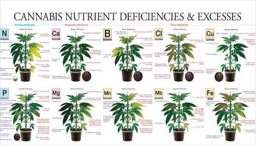микроэлементы, питание марихуаны,