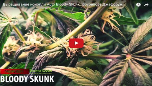 growing, репорт, cannabis, marijuana,