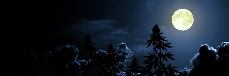 лунный календарь для конопли