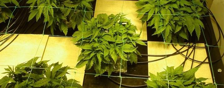Гидропонический метод выращивания марихуаны в закрытых помещениях ч.1