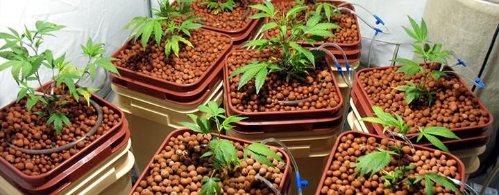 Гидропонический метод выращивания марихуаны в закрытых помещениях ч.2