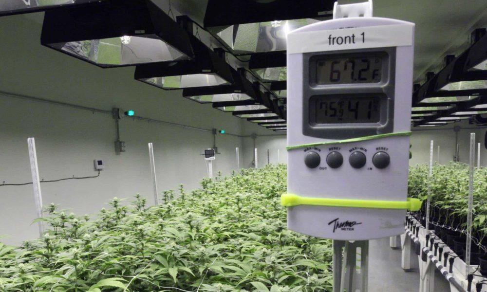 Какая температура и влажность лучшая для выращивании в помещениях?