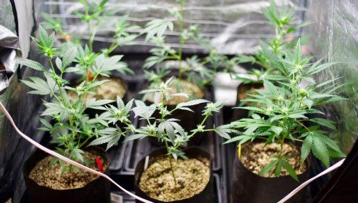 общее фото выращивание в индоре