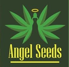 Честный обзор и отзывы об интернет-магазине «Angel Seeds»