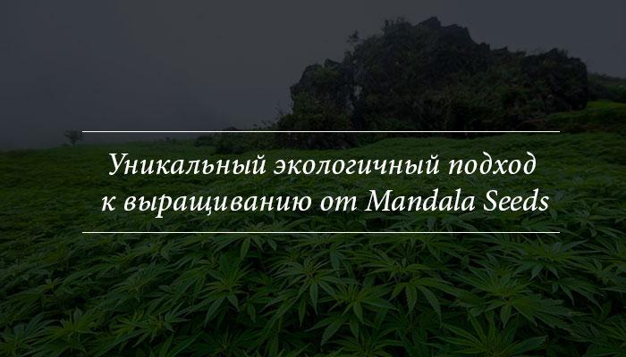 Уникальный экологичный подход к выращиванию от Mandala Seeds