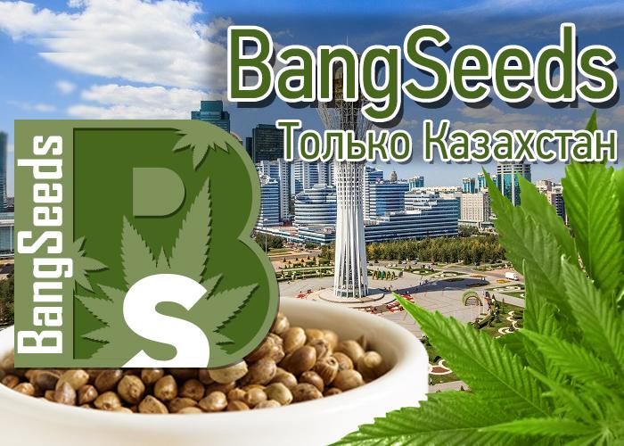 Где купить семена конопли в Казахстане?