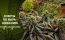 Советы по выращиванию марихуаны: как растить большие и вкусные шишки