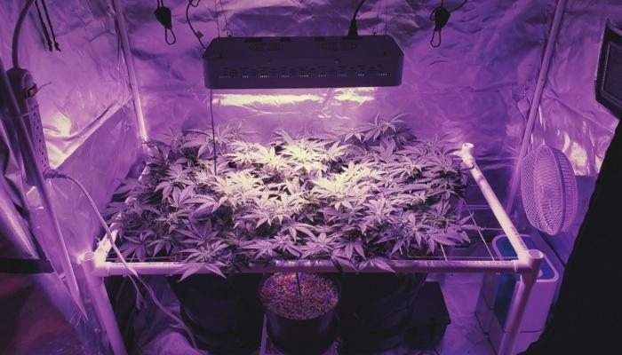 марихуана свет, свет и марихуана, свет для марихуаны, марихуана и свет, лампа для марихуаны, автоцветущие сорта конопли, выращивание автоцветущих сортов каннабиса, досвет конопли, нехватка света в боксе, лампа для выращивания марихуаны, 18\6, 24\0, growing light, autoflowering strains, feminised seeds,