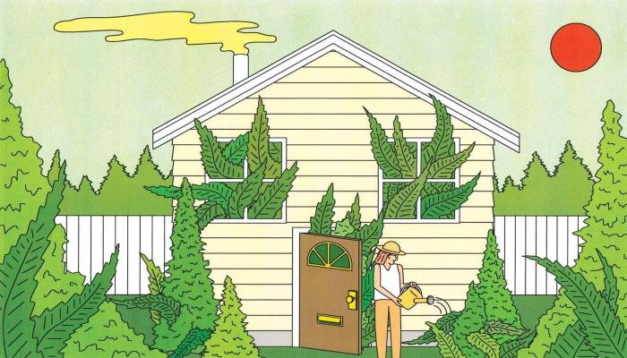 growing weed, выращивание марихуаны, советы в выращивании марихуаны, как правильно выращивать марихуану,