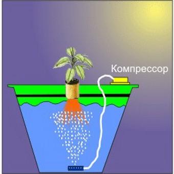 hydroponic-marijuana