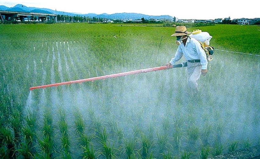 Пестициды в марихуане