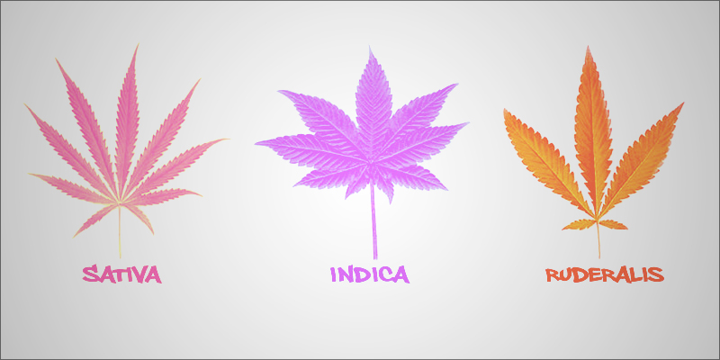 Are_Indicas_And_2-1
