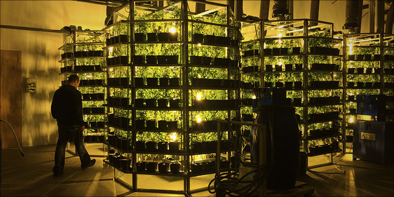 Vertical_Farming_The_2